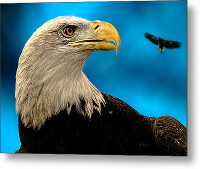 Bald Eagle And Fledgling  Metal Print by Bob Orsillo