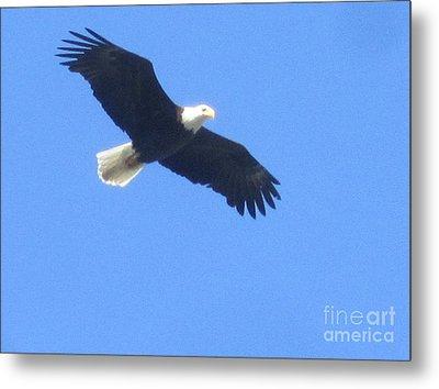 Bald Eagle At Lake Rowena Metal Print by Jeffrey Koss