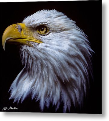 Metal Print featuring the photograph Bald Eagle by Jeff Goulden