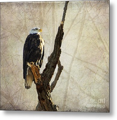 Bald Eagle Keeping Watch In Illinois Metal Print by Luther Fine Art