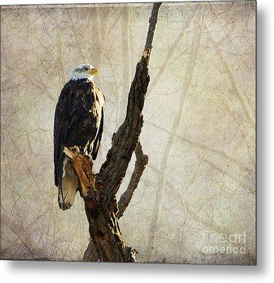 Bald Eagle Keeping Watch In Illinois Metal Print