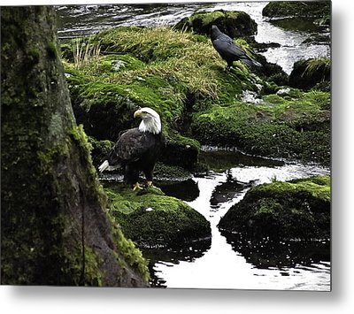 Metal Print featuring the pyrography Bald Eagle On The Creek. by Timothy Latta