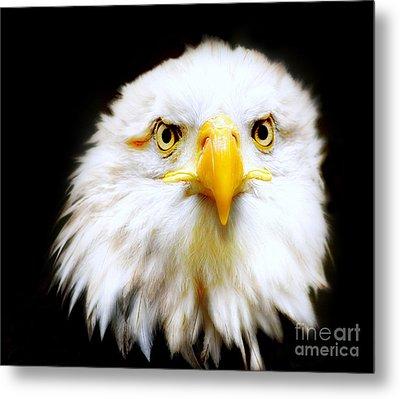 Bald Eagle Metal Print by Jacky Gerritsen