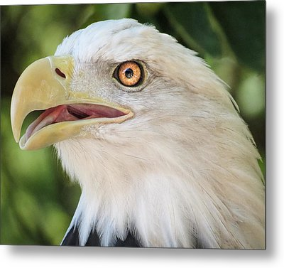 Metal Print featuring the photograph American Bald Eagle Portrait - Bright Eye by Patti Deters