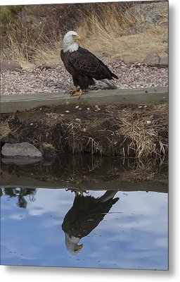 Bald Eagle Reflection Metal Print