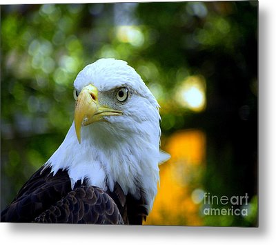Bald Eagle Metal Print by Terri Mills