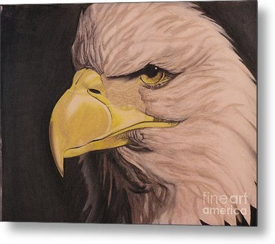 Bald Eagle Metal Print by Wil Golden