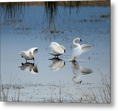 Dance Of The Trumpeters Metal Print