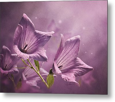 Balloon Flowers Metal Print by Ann Lauwers