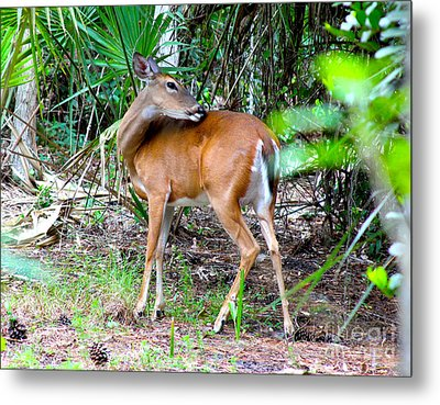 Bambi In The Brush Metal Print