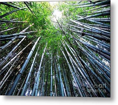 Bamboo . A Renewable Resource Metal Print