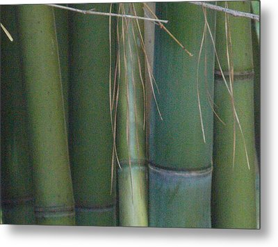 Bamboo 3 Metal Print