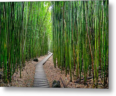 Bamboo Brilliance Metal Print by Sean Davey