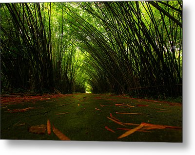 Bamboo Cathedral Metal Print by Dexter Browne