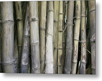 Bamboo, Dharamsala, India Metal Print by Phil Borges
