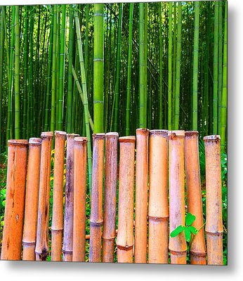 Metal Print featuring the photograph Bamboo Fence by Julia Ivanovna Willhite