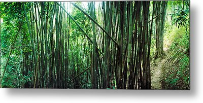 Bamboo Forest, Chiang Mai, Thailand Metal Print by Panoramic Images