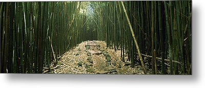 Bamboo Forest, Hana Coast, Maui Metal Print by Panoramic Images