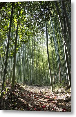 Bamboo Forest Metal Print by John Wong
