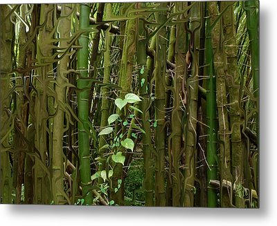 Bamboo Forest Metal Print by Tony Rodriguez