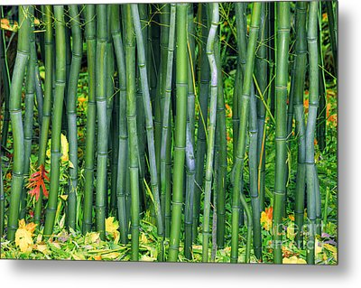 Bamboo Greens Metal Print by Marco Crupi