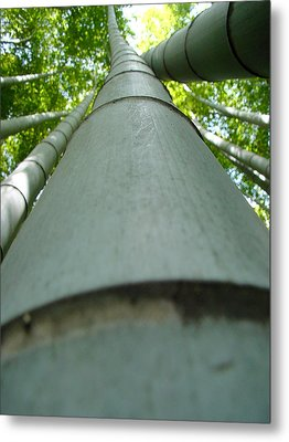 Bamboo Grove In Morning Metal Print by Larry Knipfing