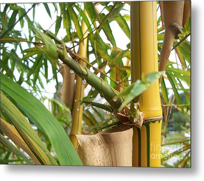 Bamboo  Metal Print by Heather Duncan