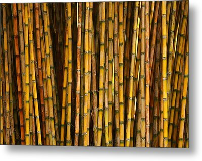 Bamboo Metal Print by Jacqui Collett