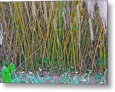 Metal Print featuring the photograph Bamboo by Lorna Maza