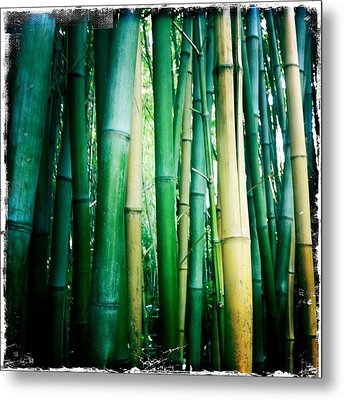 Bamboo Metal Print by Sarah Coppola