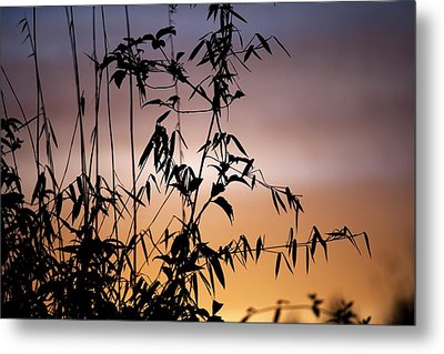 Bamboo Stems At Sunset Metal Print by Ian Gowland