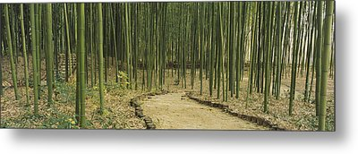 Bamboo Trees On Both Sides Of A Path Metal Print by Panoramic Images