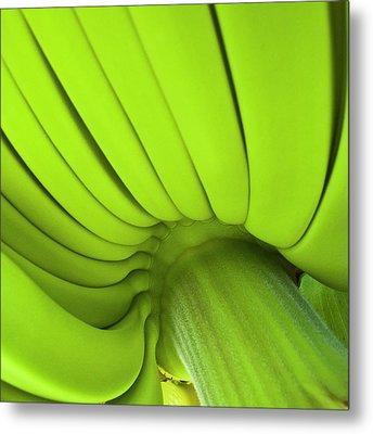 Banana Bunch Metal Print by Heiko Koehrer-Wagner