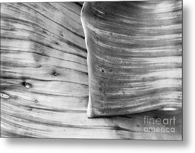 Banana Leaf Abstract Metal Print by Dean Harte