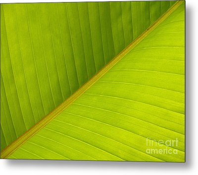 Banana Leaf Diagonal Pattern Close-up Metal Print by Anna Lisa Yoder