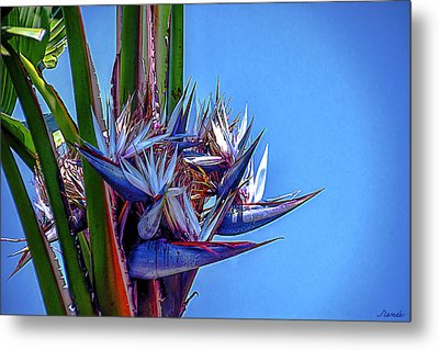 Banana Tree Daylight 3 Metal Print