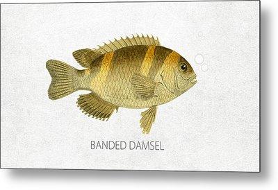 Banded Damsel Metal Print by Aged Pixel