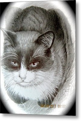 Metal Print featuring the painting Bandit by Patricia Schneider Mitchell