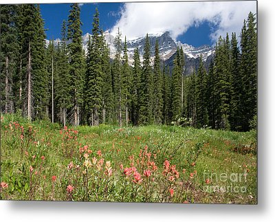 Metal Print featuring the photograph Banff Wildflowers by Chris Scroggins