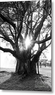 Banyan Tree Metal Print by Alison Tomich