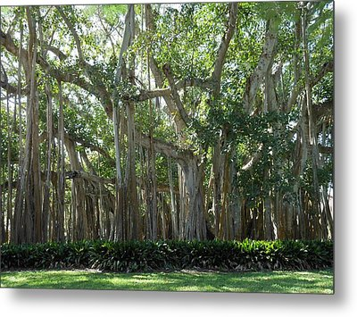 Banyan Tree Metal Print
