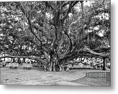 Banyan Tree Metal Print by Scott Pellegrin