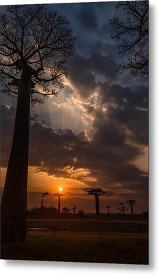 Baobab Sunrays Metal Print