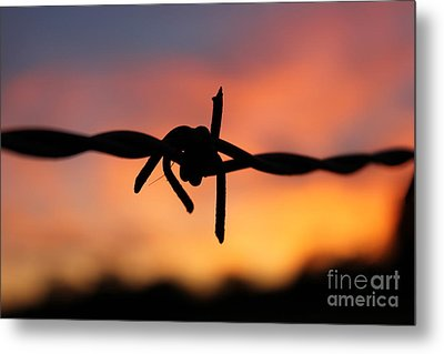 Barbed Silhouette Metal Print by Vicki Spindler