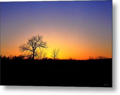 Bare Oak In Spring Sunset Metal Print