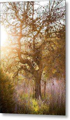 Bare Tree Metal Print by Mike Lee