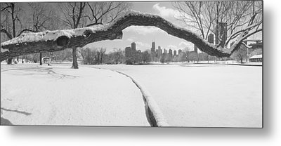 Bare Trees In A Park, Lincoln Park Metal Print