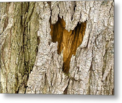 Bark Heart Metal Print by Deborah Johnson