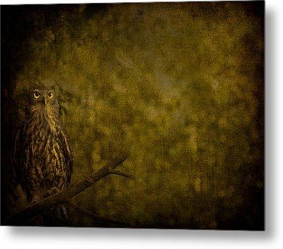 Barking Owl Metal Print by Shari Mattox