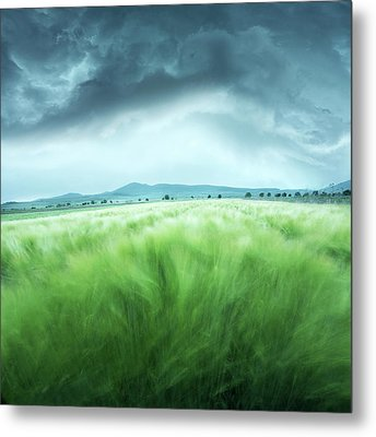 Barley Field Metal Print by Floriana Barbu